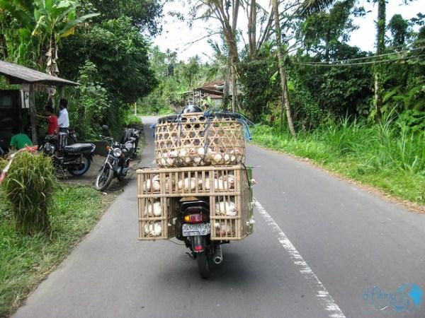 Bali Roller fahren Tipps Aanfänger