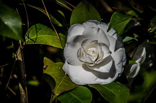 South Carolina Botanical Garden-009