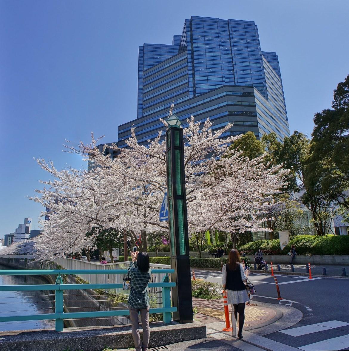 Osaki Gate City Sakura 2014 (Cherry Blossoms)