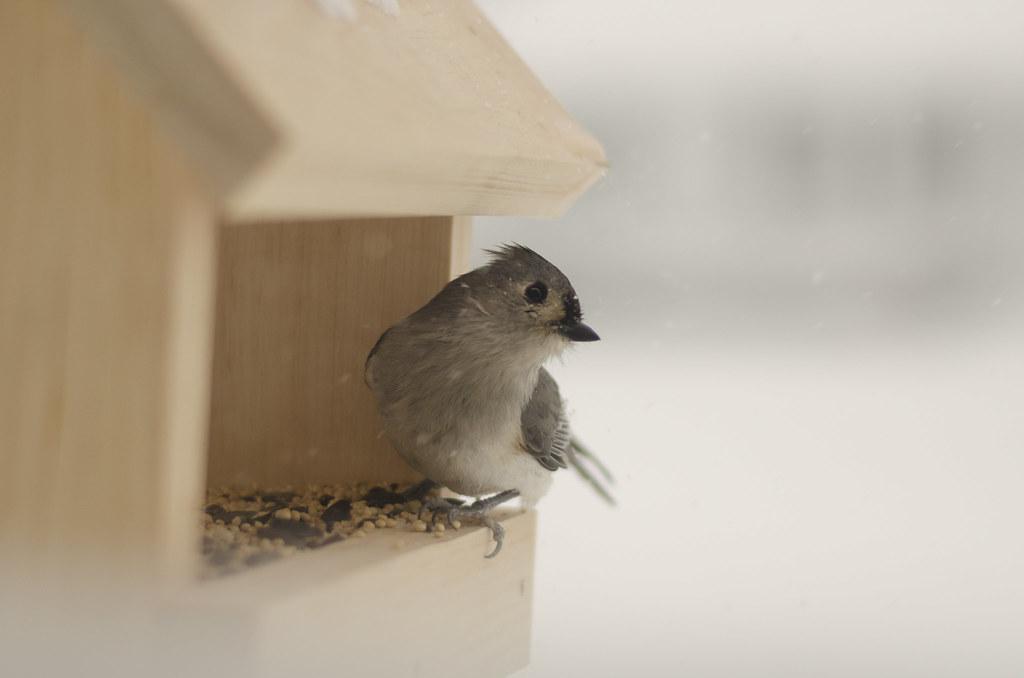 friend to the birds 5