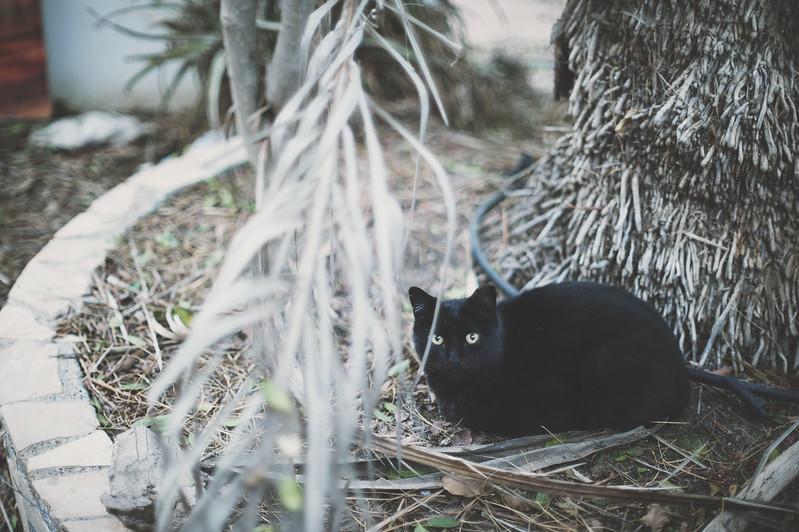 cats of fuerteventura