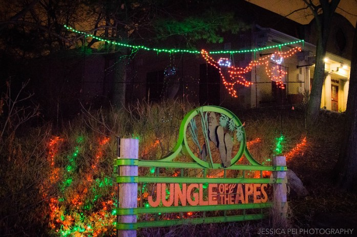 Jungle of the Apes Christmas Display at St. Louis Zoo Wild Lights