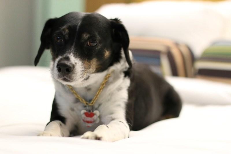 Aloft Cleveland Downtown Hotel, travel, Ohio, trip, lodging, beagle, Louis, pet, dog