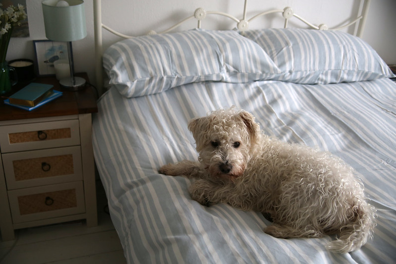 Bodhi on the bed