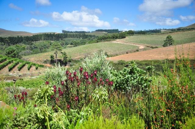 20140225-Etelä-Afrikka 2014 341