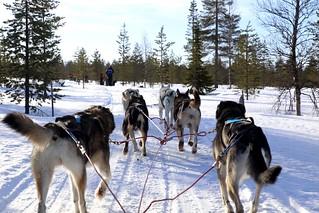 Go huskies, go