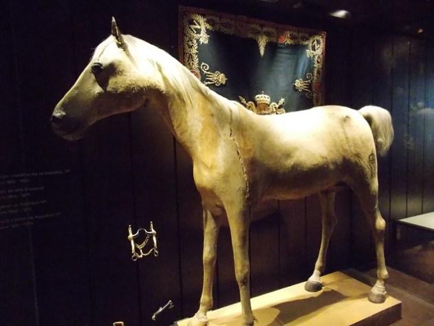 O Famoso Cavalo Branco do Napoleão era realmente branco