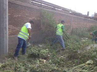 Intensifica Ayuntamiento limpieza de lotes baldíos