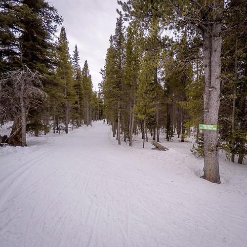 Twin Twisted Tree Trail
