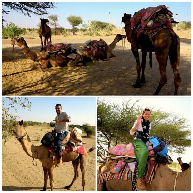 Safari camellos Jaisalmer