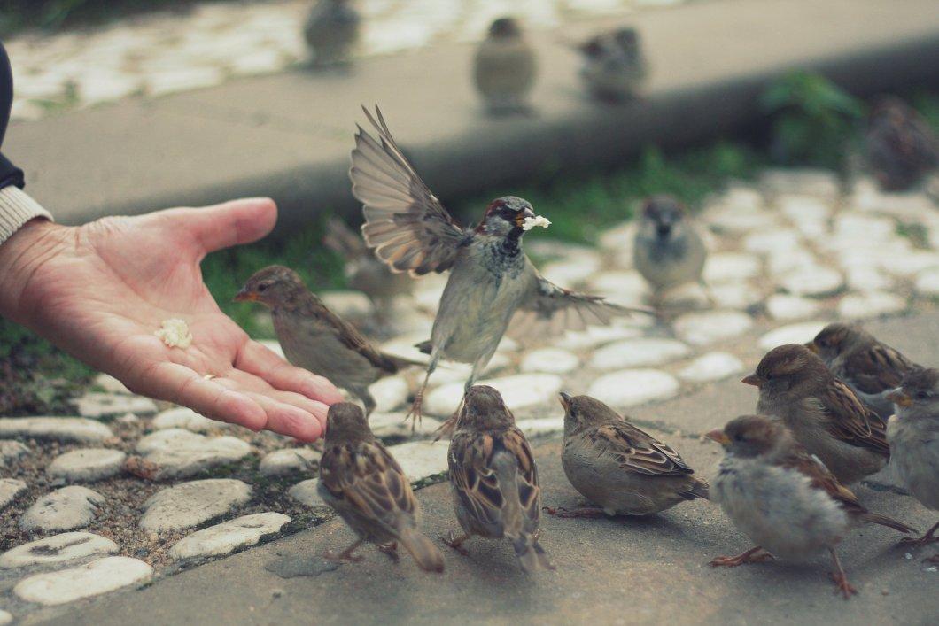 Imagen de una mano dando de comer a los pajaros