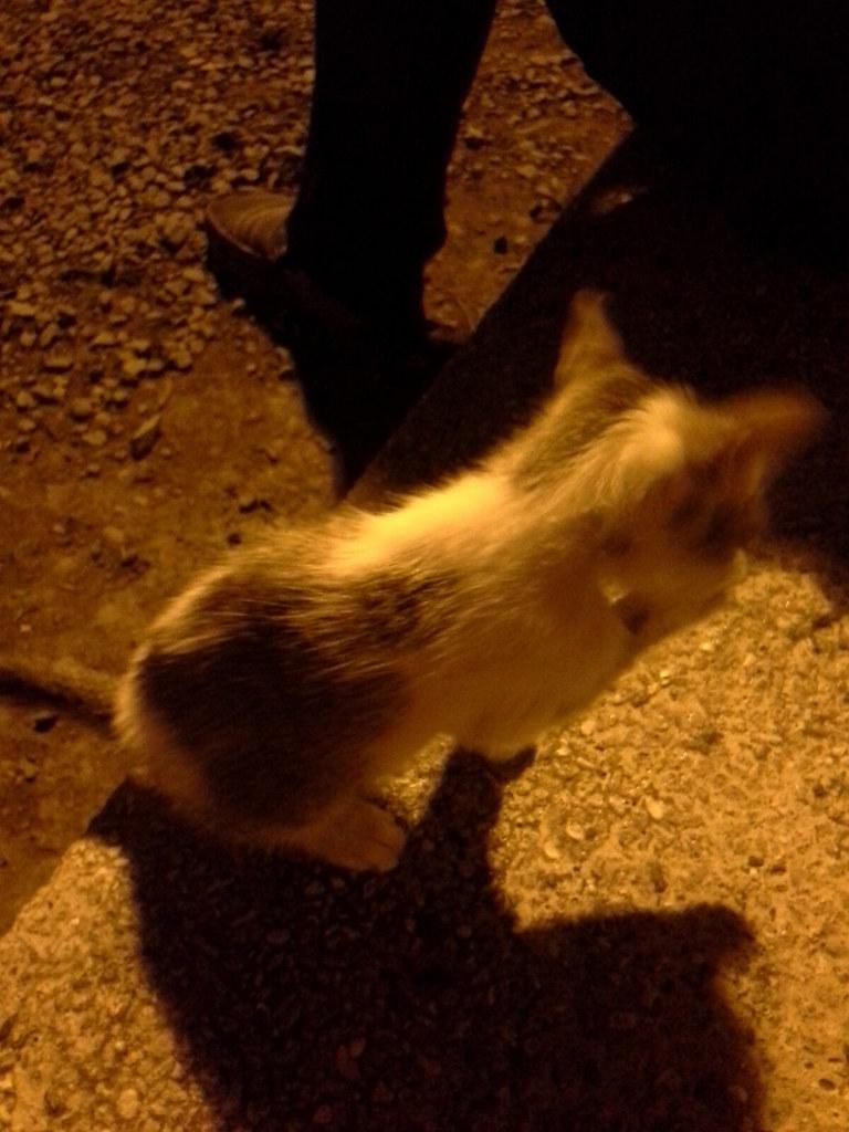 Sycip Kitten 20140506_212232