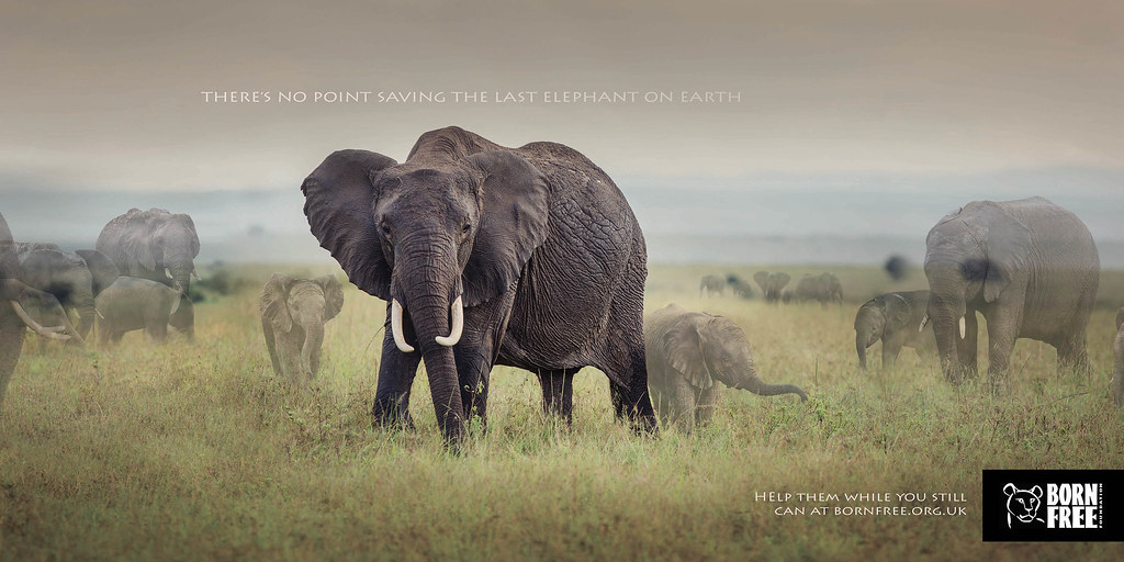Born Free Foundation - Disappearing Animals