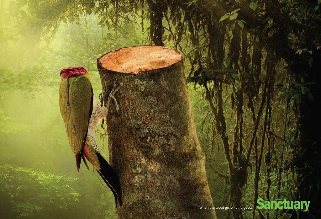 Sanctuary - Wildlife Parrot