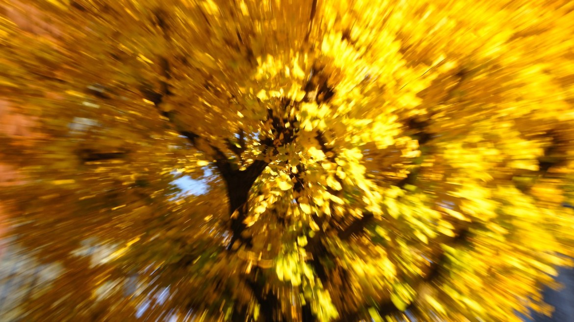 intentional camera movement for Marunouchi autumn