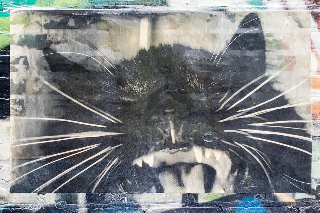 Cat - Wheatpaste