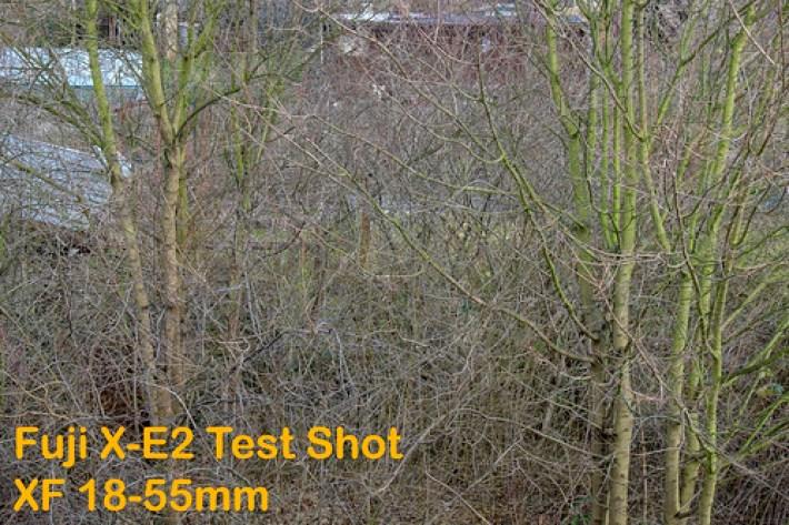 Is it sharp? FUJI X-E2 Test Shot