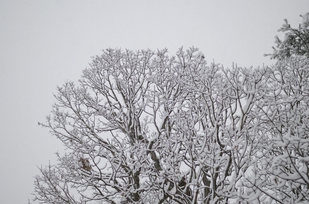 the first snow 6
