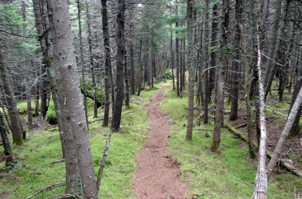 Grafton Loop Trail Forest