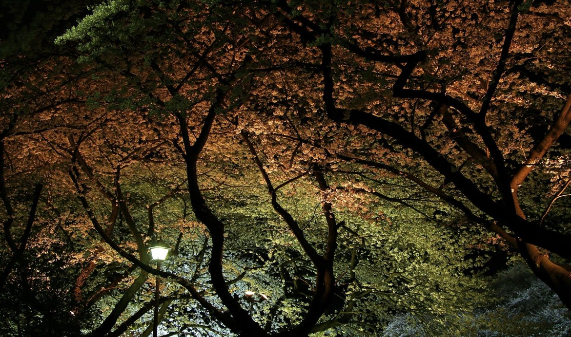 Night time illumination at Chidorigafuchi