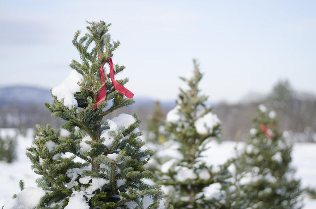 christmas tree 20