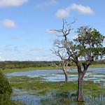 14 Viajefilos en Sri Lanka. Yala 30