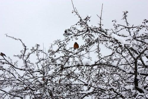 20150305_SNOW_083