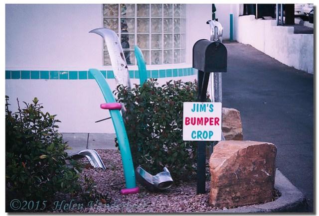 """A """"Bumper Crop"""""""