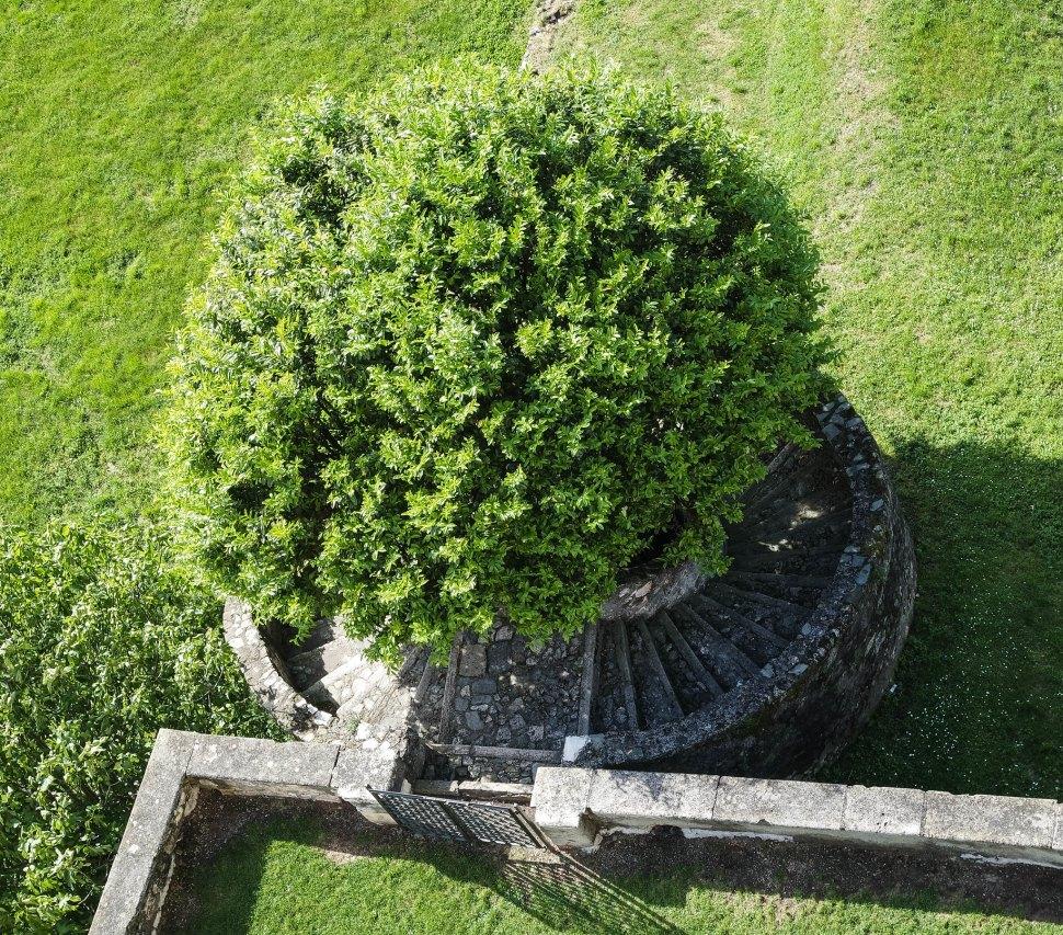 Albero alla Rocca di Angera