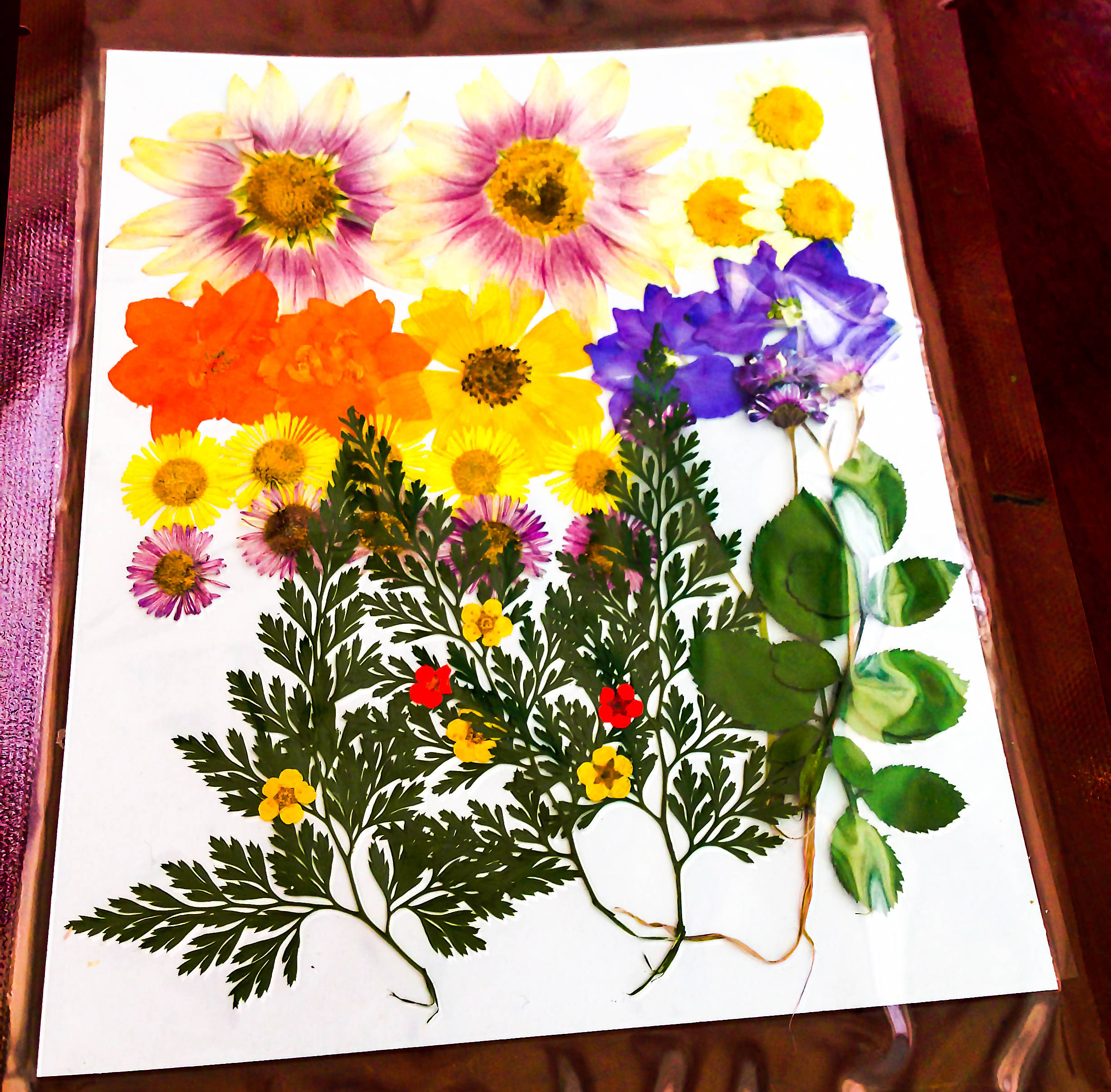 Pressed Dry Flowers With Paper