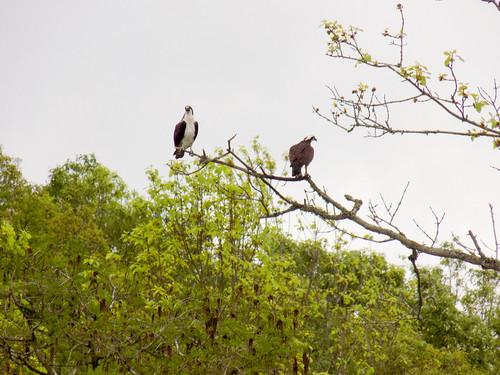 Lake Marion Plantation Islands-025