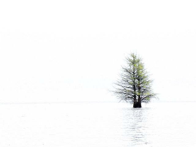 Minimalist Cypress High Key