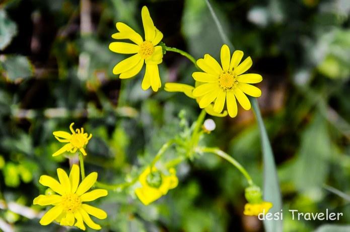 Wild Flowers Ajloun Forest Reserve Jordan