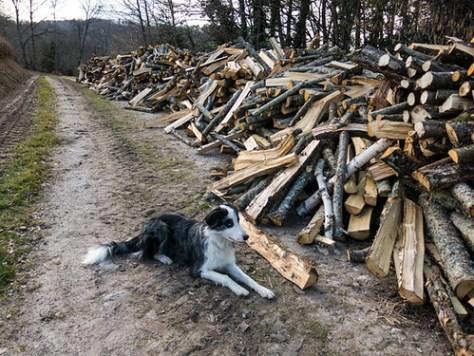 Bleu posing next to the firewood