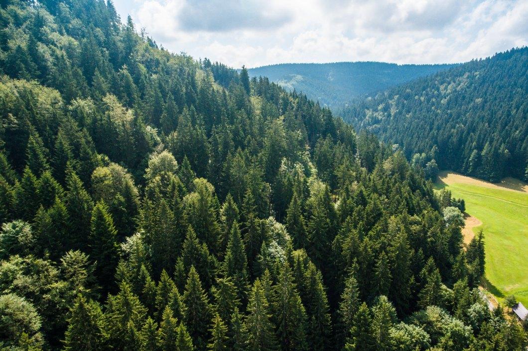 Imagen gratis de un bosque sobre una ladera