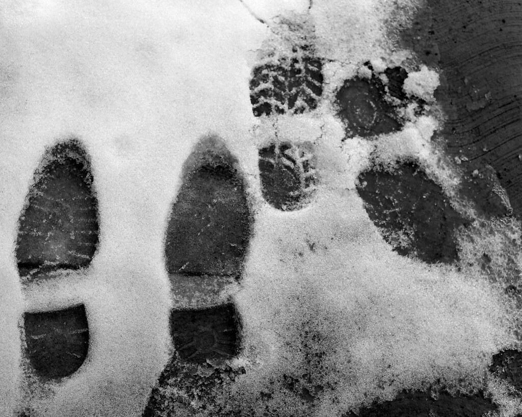 Imagen gratis de huellas en la nieve