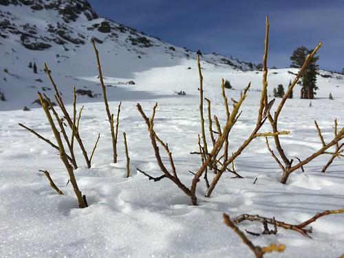 Twigs poking through