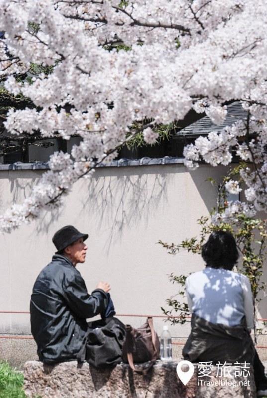 京都赏樱景点 哲学之道 07