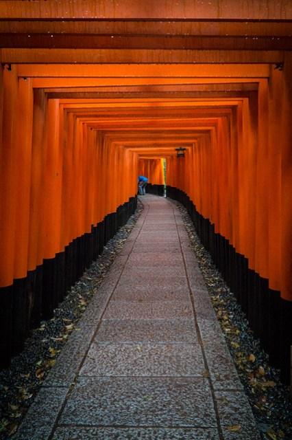Torii @ Fushimi Inari-taisha