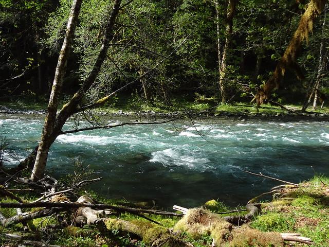 Quinault River