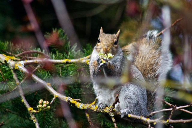 Squirrel15_ 019