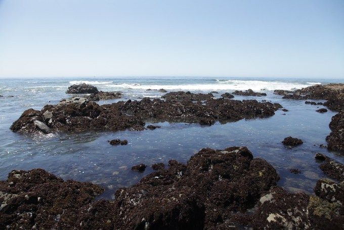 The Tidepools at San Simeon State Beach