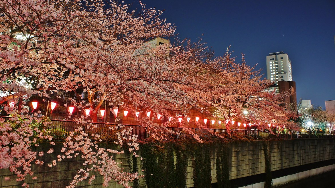 Pink lanterns at Meguro River Cherry blossom illumination 2015