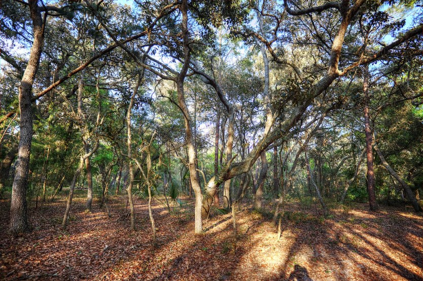 Looking out into the Wilderness at Starkey Park.