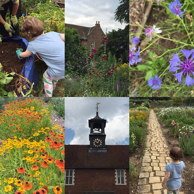 Brilliant afternoon @osterleynt doing some vegetable gardening and admiring the flowers