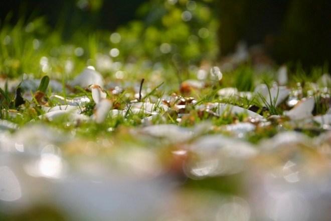 Magnolienblätter (3)
