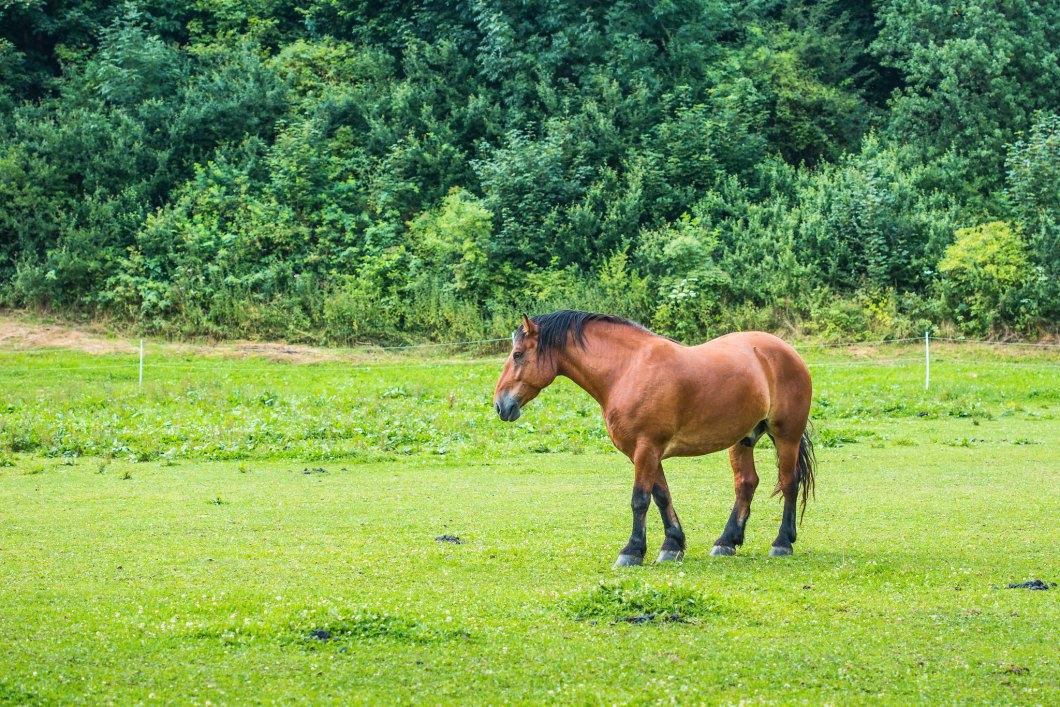 Imagen gratis de un caballo marron en un prado verde