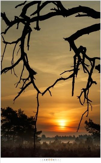Spelen met compositie en mijn voorliefde voor telelenzen bij zonsopkomst en zonondergang.