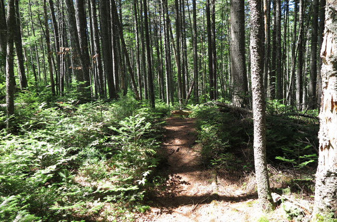 Carrigain Notch Trail After Turn
