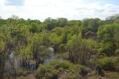 016 Arkansas Swamps